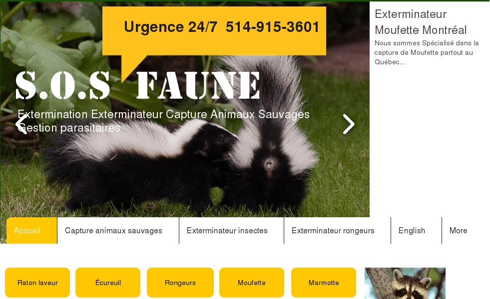 extermination exterminateur sos faune capture animaux 514 915 3601. Black Bedroom Furniture Sets. Home Design Ideas